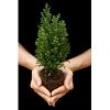 Cypress Search